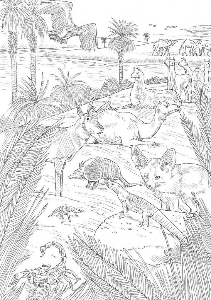 Peter James Field Illustration